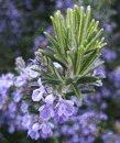 roemory flowers
