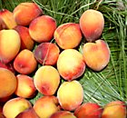 Yellow-red peaches