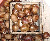 chestnuts in South Korean market