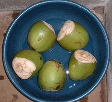 tender coconuts ready for drink