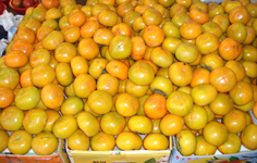 Persimmons in a Korean market