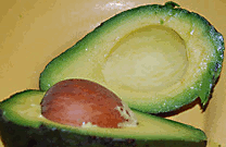 avocado-persea americana, cut section with large single avocado seed inside.