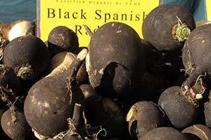 Black spanish radishes