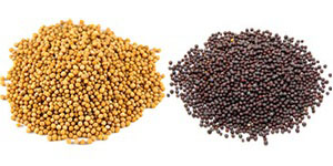Yellow-and-brown mustard seeds