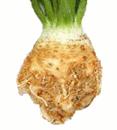 root celeriac