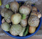 fresh custard apples in a market