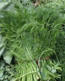 Fresh dill weed in a market