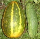dosakai-Indian curry cucumber