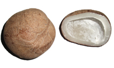 dried coconut or copra