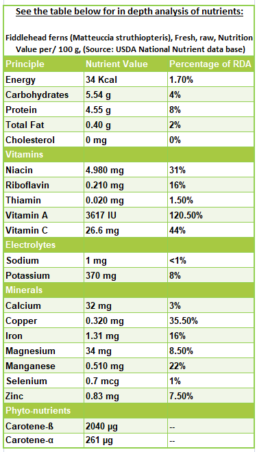 Fiddlehead ferns nutrition facts