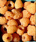 golden-raspberries
