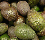 Hass variety avocados. note dark brown color and pebble surface hass avocados.