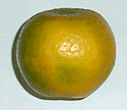 Nagpur orange from India