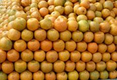 oranges- citrus sinensis.