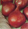 oriental onion