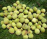whitish-green-peaches