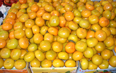 fresh persimmons in a seol market