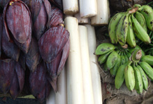 plantain, Inflorescence and tender plantain stem