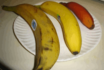 Plantains and bananas