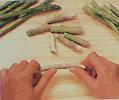 breaking asparagus shoots