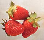 strawberry fruits