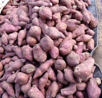 sweet potatoes in a market