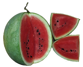 Watermelon fruit nutrition