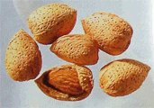 almond nuts in shell