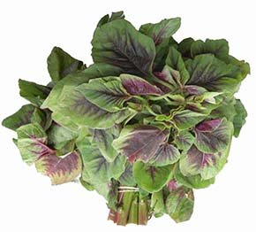 Amaranth greens (chinese spinach)