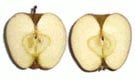 apple cut sections