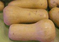 ripe butternut squash