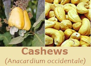 Cashews with apple
