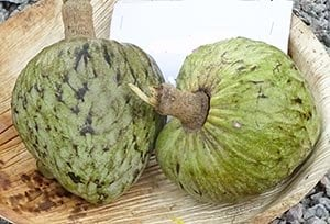 cherimoya fruits