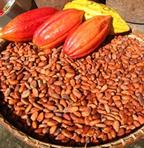 cocoa pods and dry beans