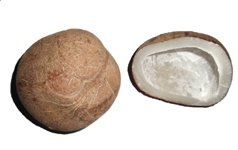 dry coconut or copra