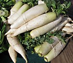 winter daikon