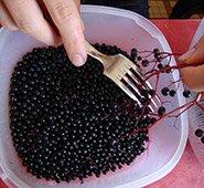 de-stemming-of-elderberry using a fork