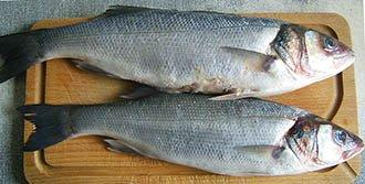 European-sea-bass
