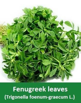 Fenugreek leaves