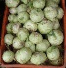 german turnips in a market