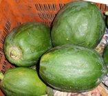raw green unripe papaya fruit.