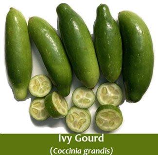 Ivy gourd-Coccinia grandis (Kundru)