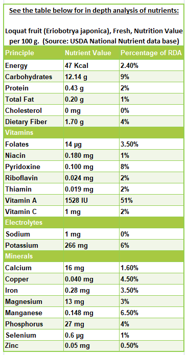 Loquat fruit nutrition facts