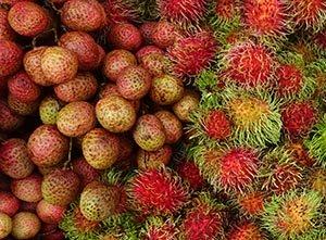 Rambutan and lychee fruits