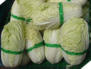 Napa Cabbage Chinese Cabbage Nutrition Facts And Health Benefits