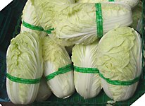 chinese celery cabbage