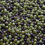 fresh olive fruits