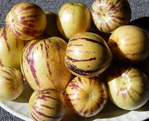 pepino fruits
