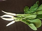 Radish-white