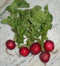 red-globe radishes